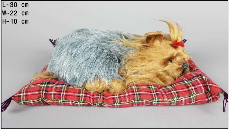 Pies Yorkshire Terrier na poduszce Rozmiar L