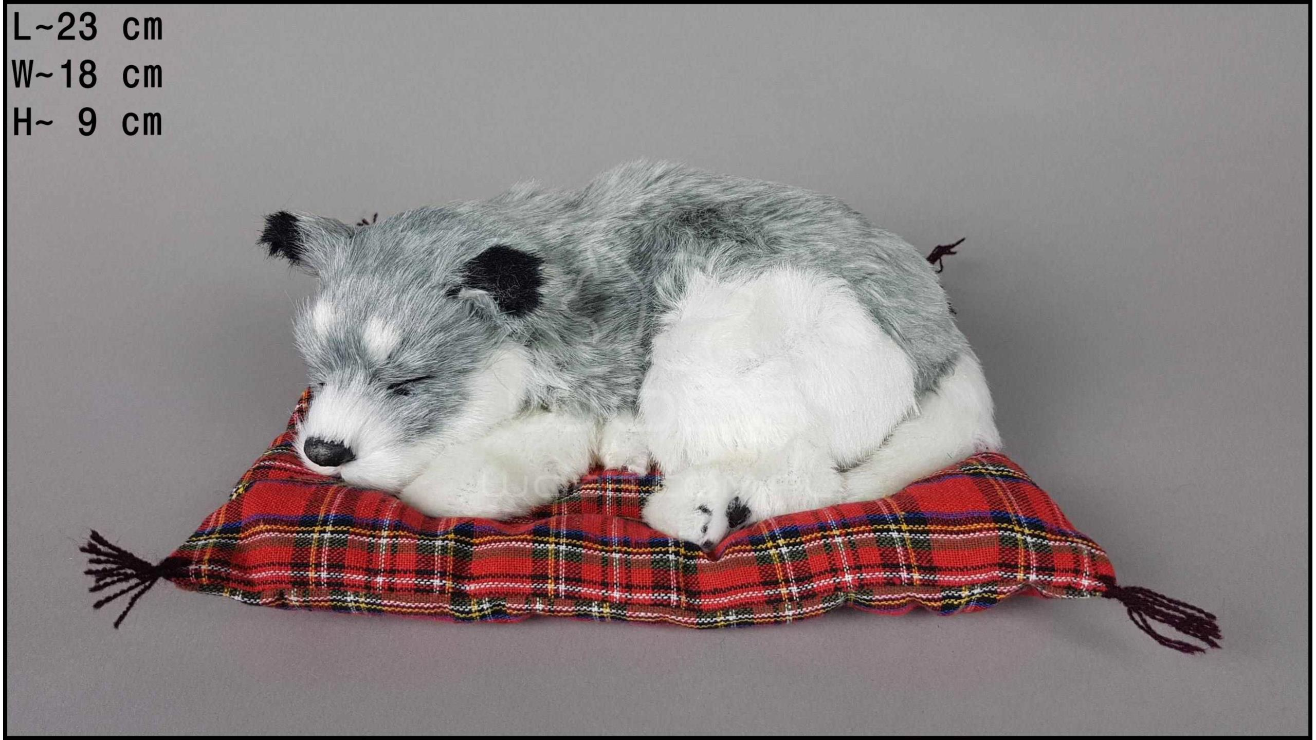 Dog Husky on a pillow - Size M