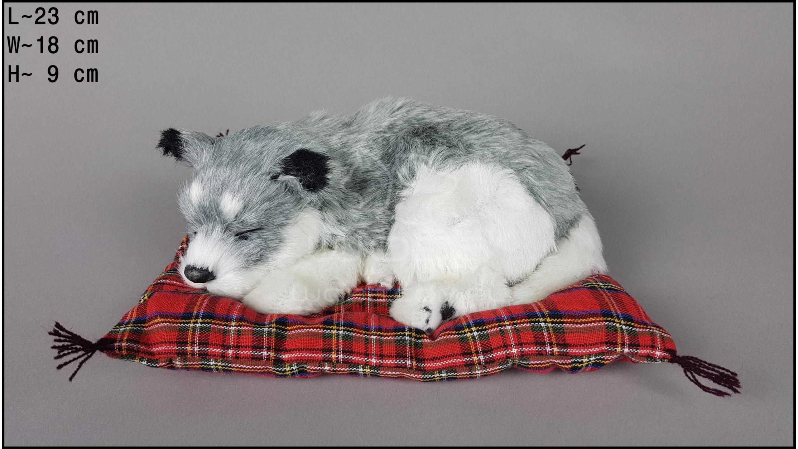 Pies Husky na poduszce Rozmiar M