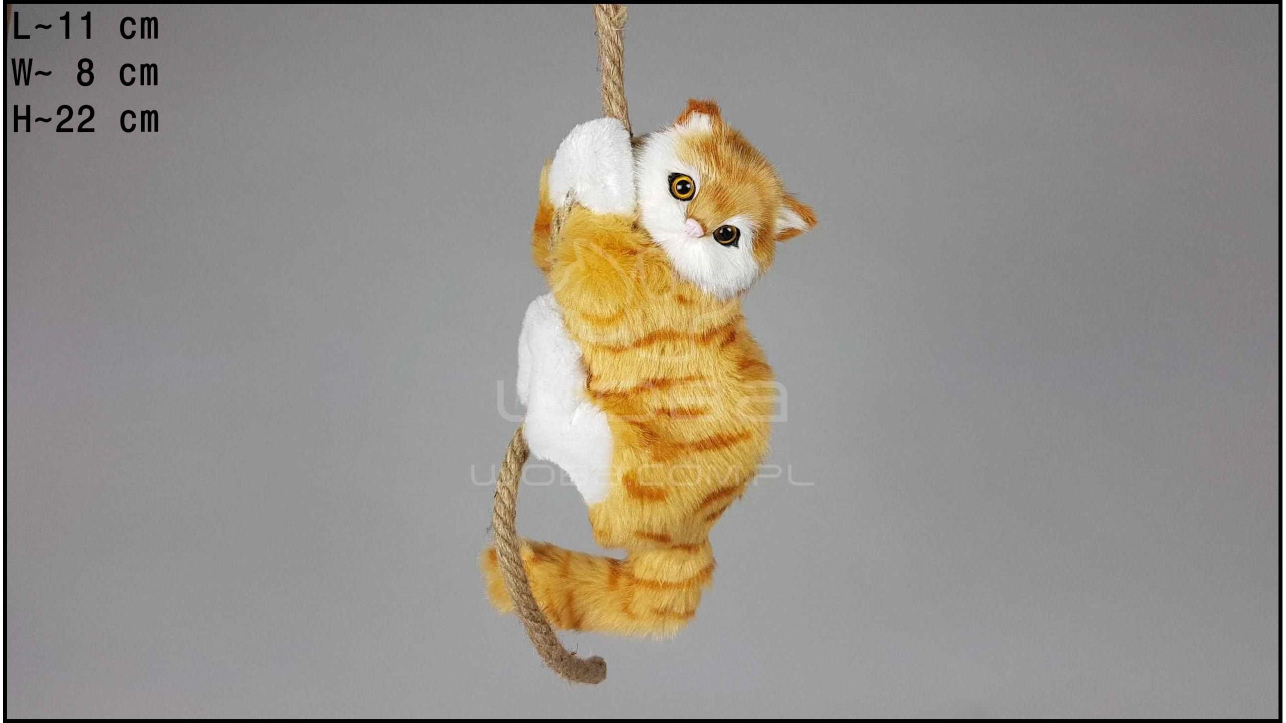 Cat climbing a rope - Auburn