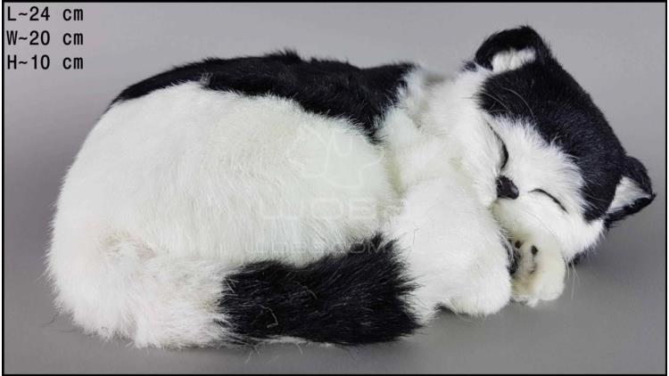 Cat sleeping - Size L - Black & White