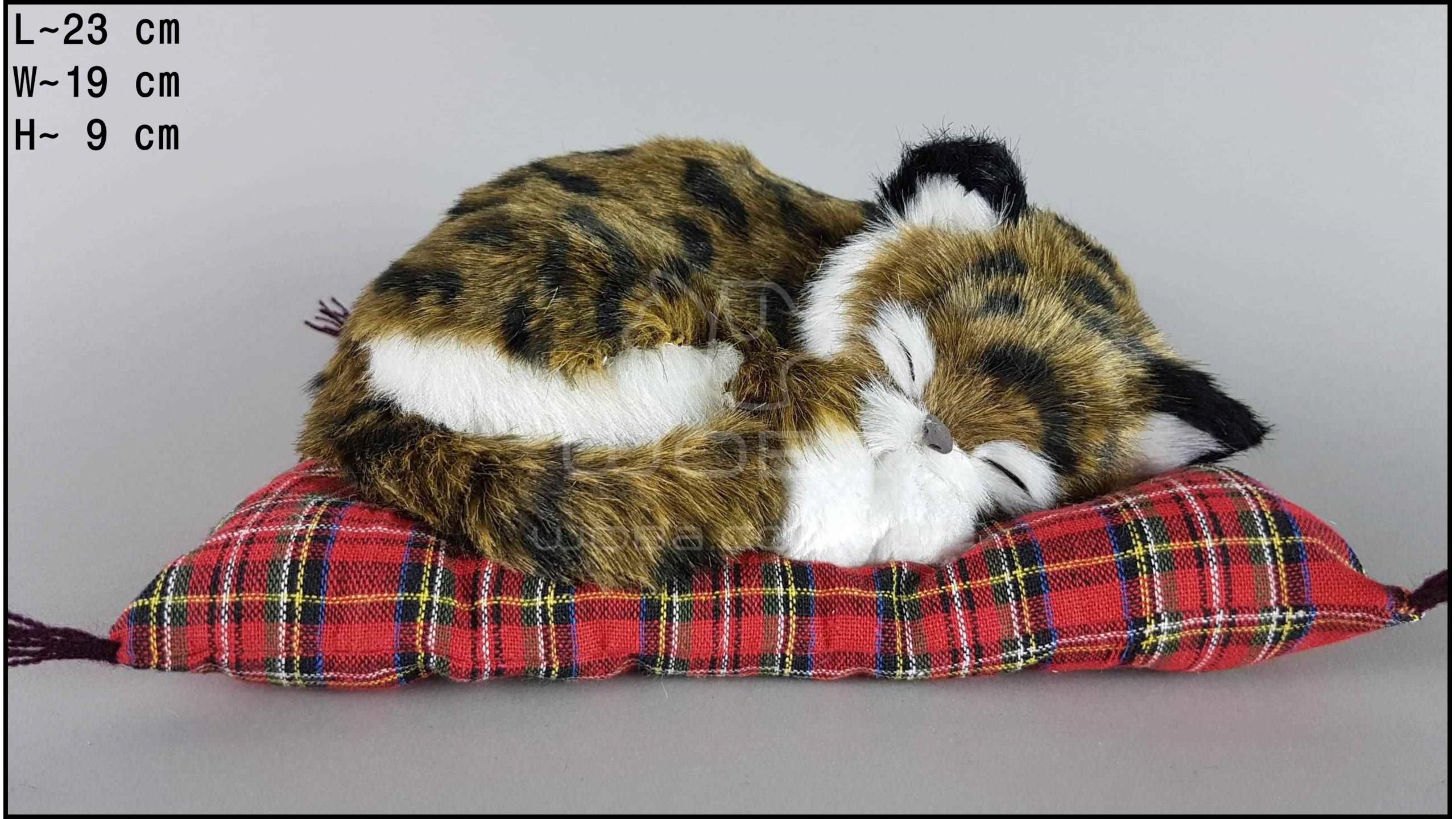 Kot śpiący na poduszce Rozmiar M - Brązowy