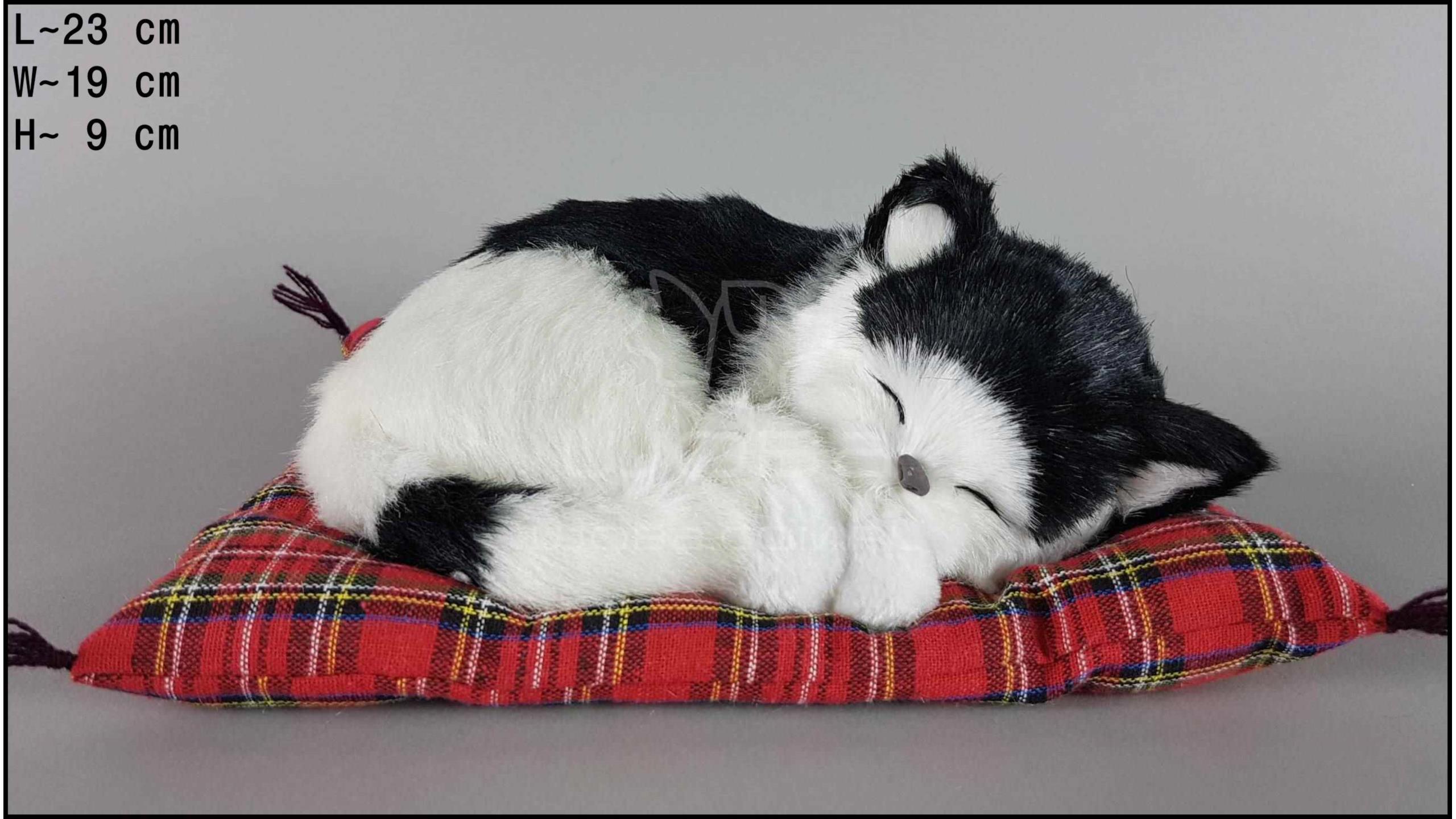 Kot śpiący na poduszce Rozmiar M - Czarno-Biały