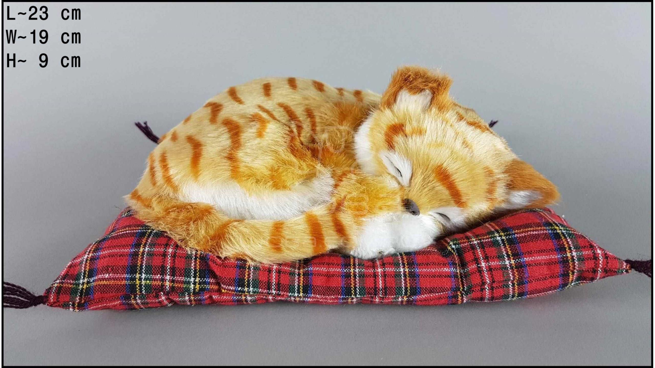 Kot śpiący na poduszce Rozmiar M - Rudy