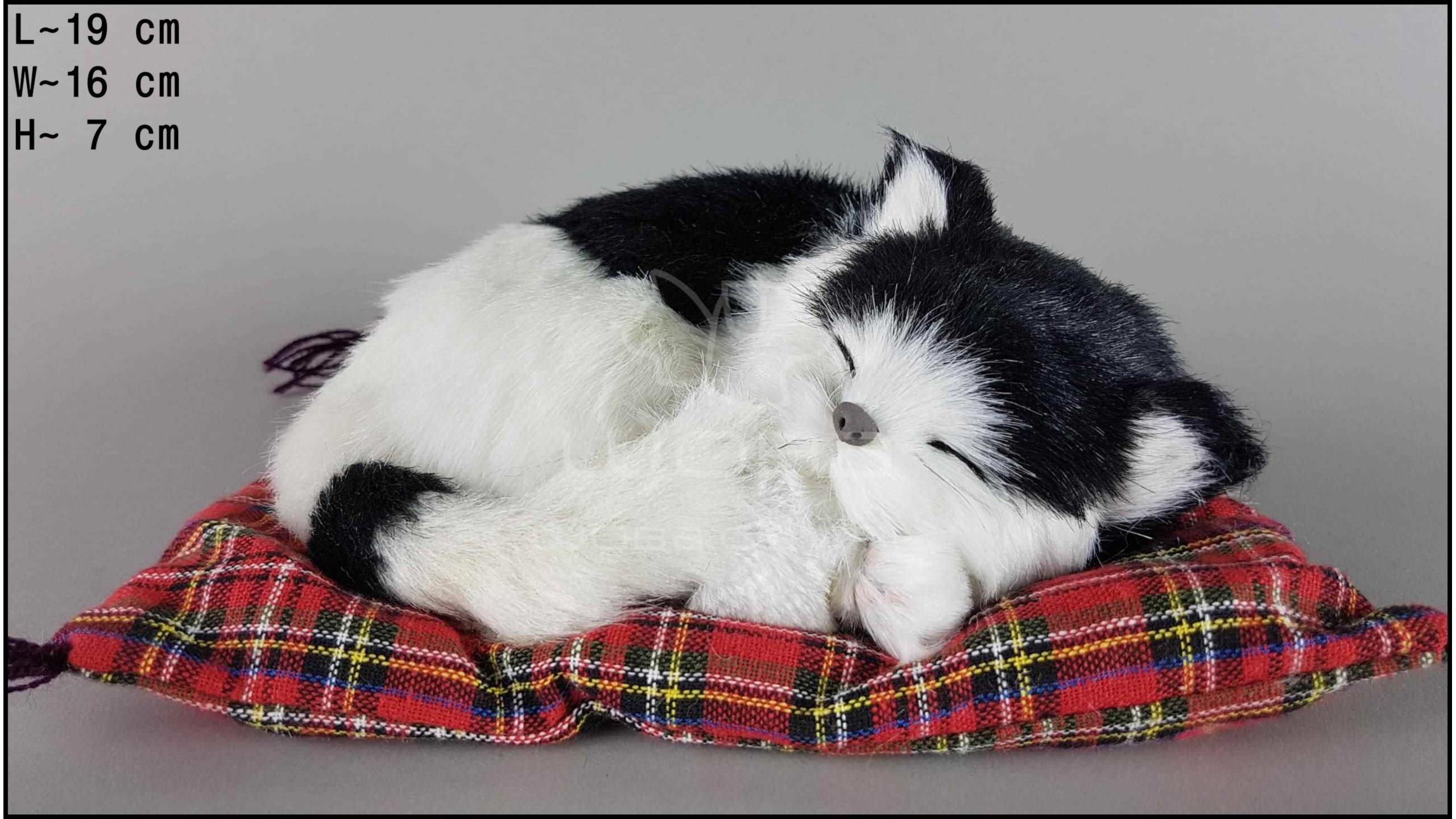 Kot śpiący na poduszce Rozmiar S - Czarno-Biały