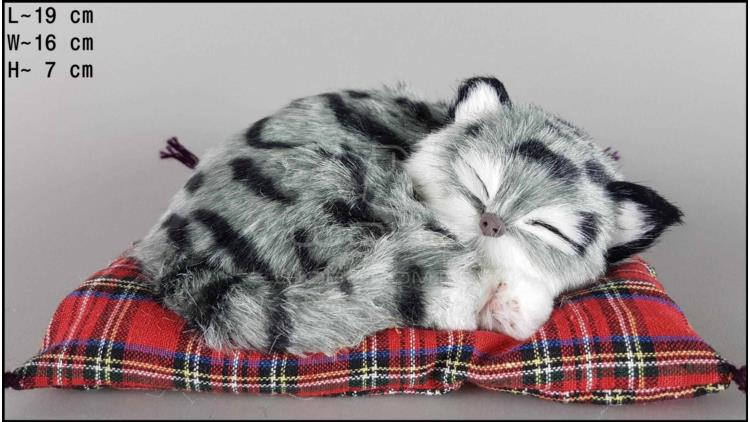 Cat sleeping on a pillow - Size S - Grey