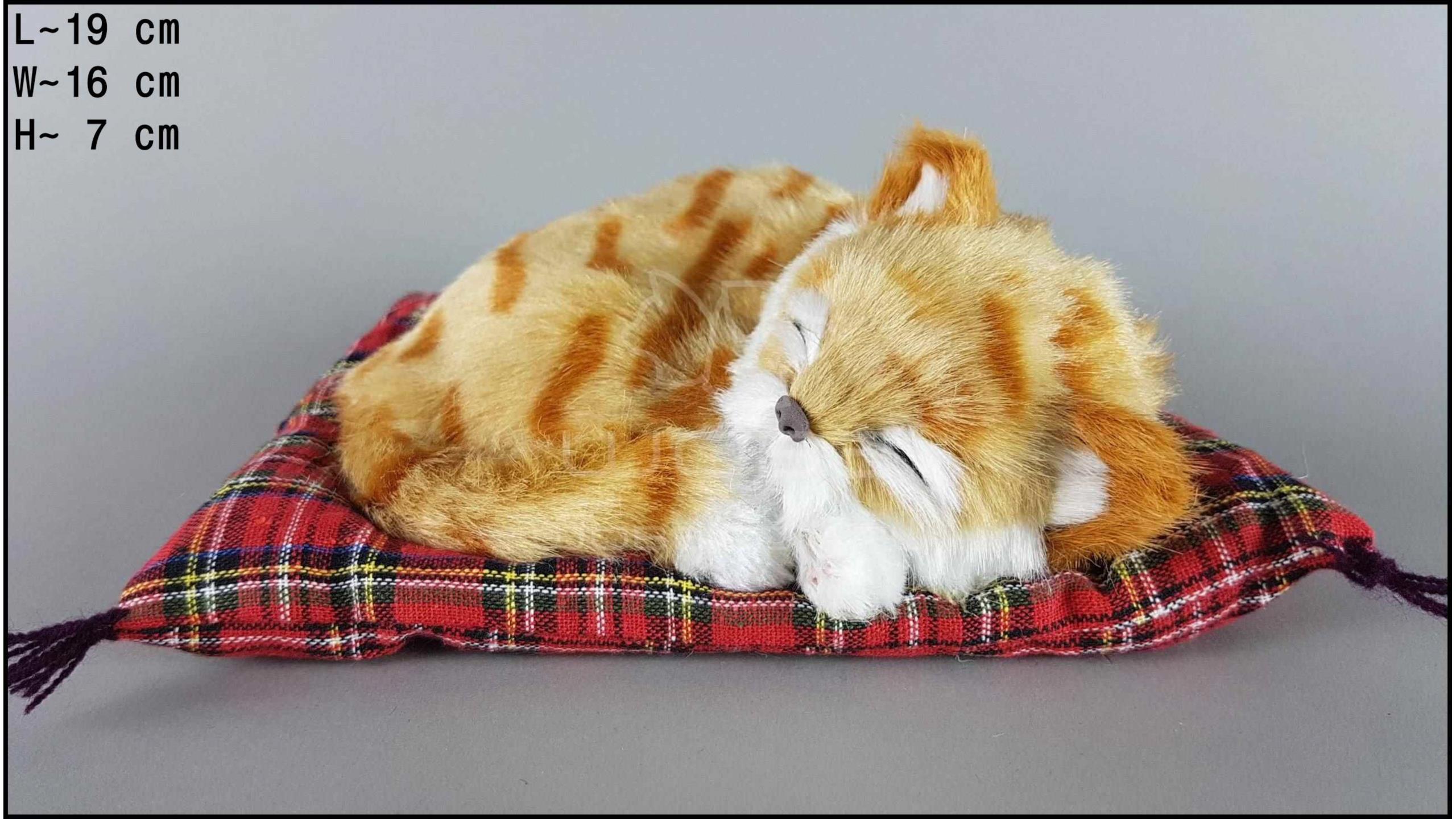 Kot śpiący na poduszce Rozmiar S - Rudy