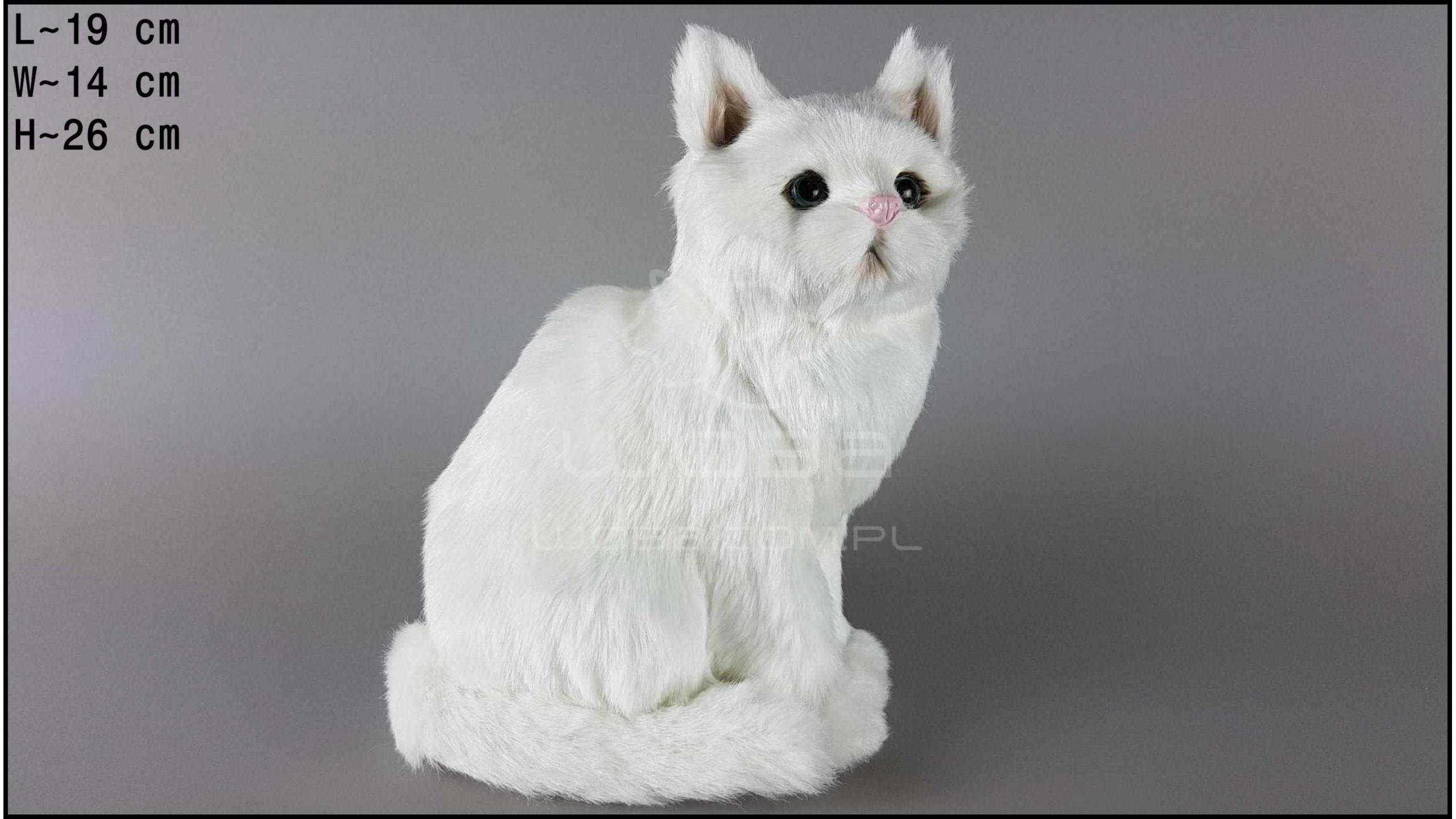 Kot duży, siedzący Biały