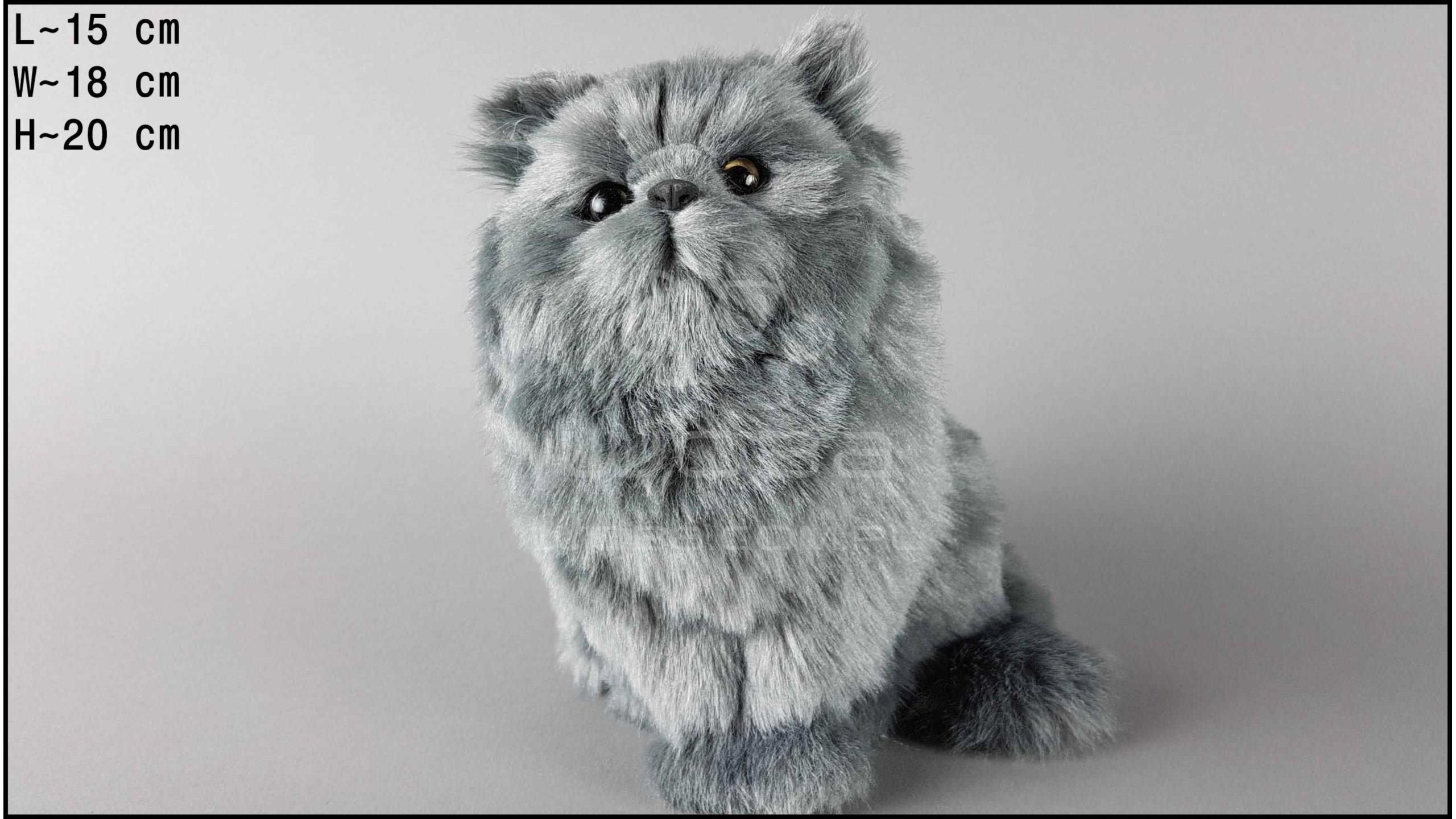 Kot duży, włochaty Szary
