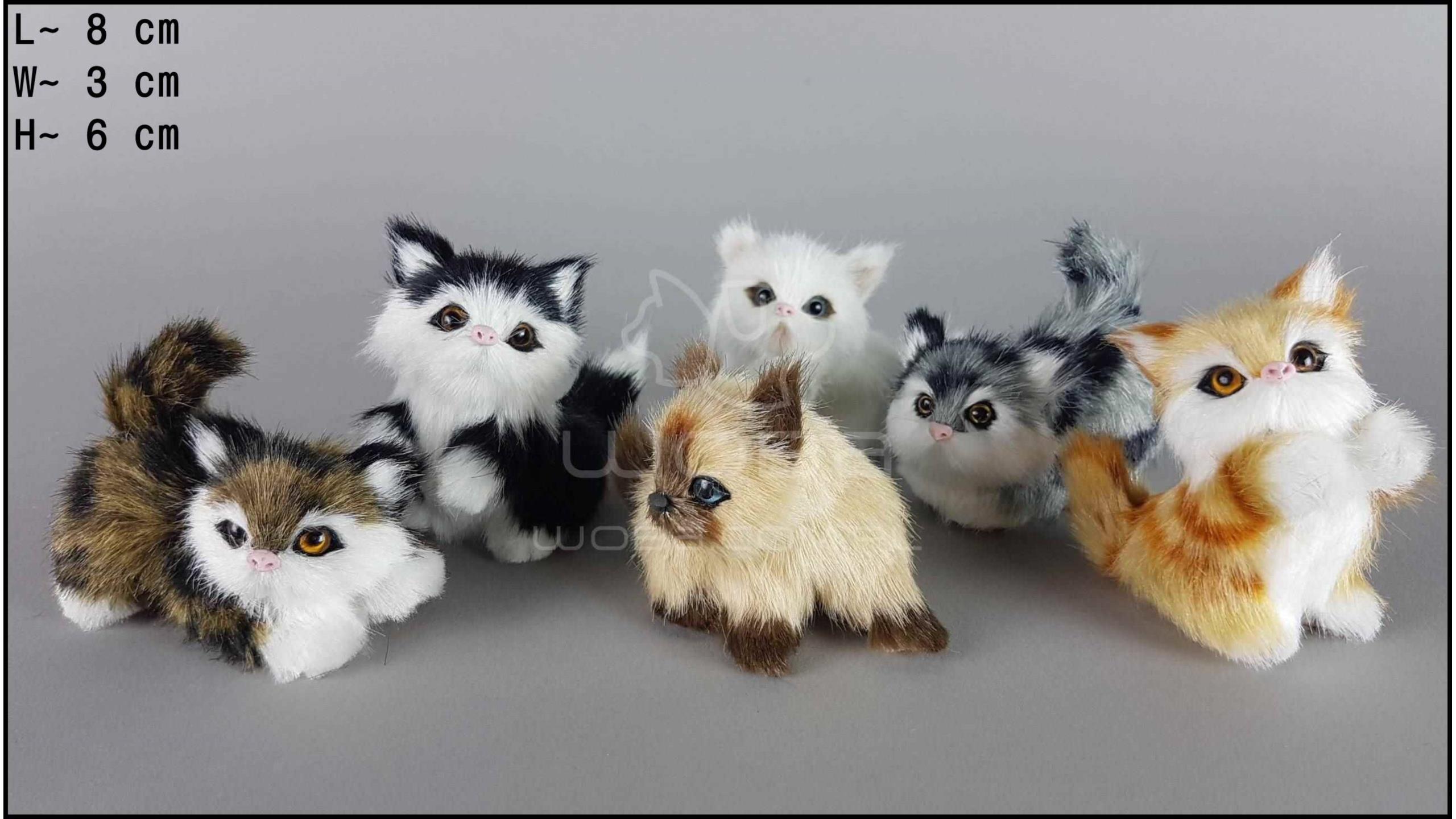 Kotki małe (6 szt. w opakowaniu)