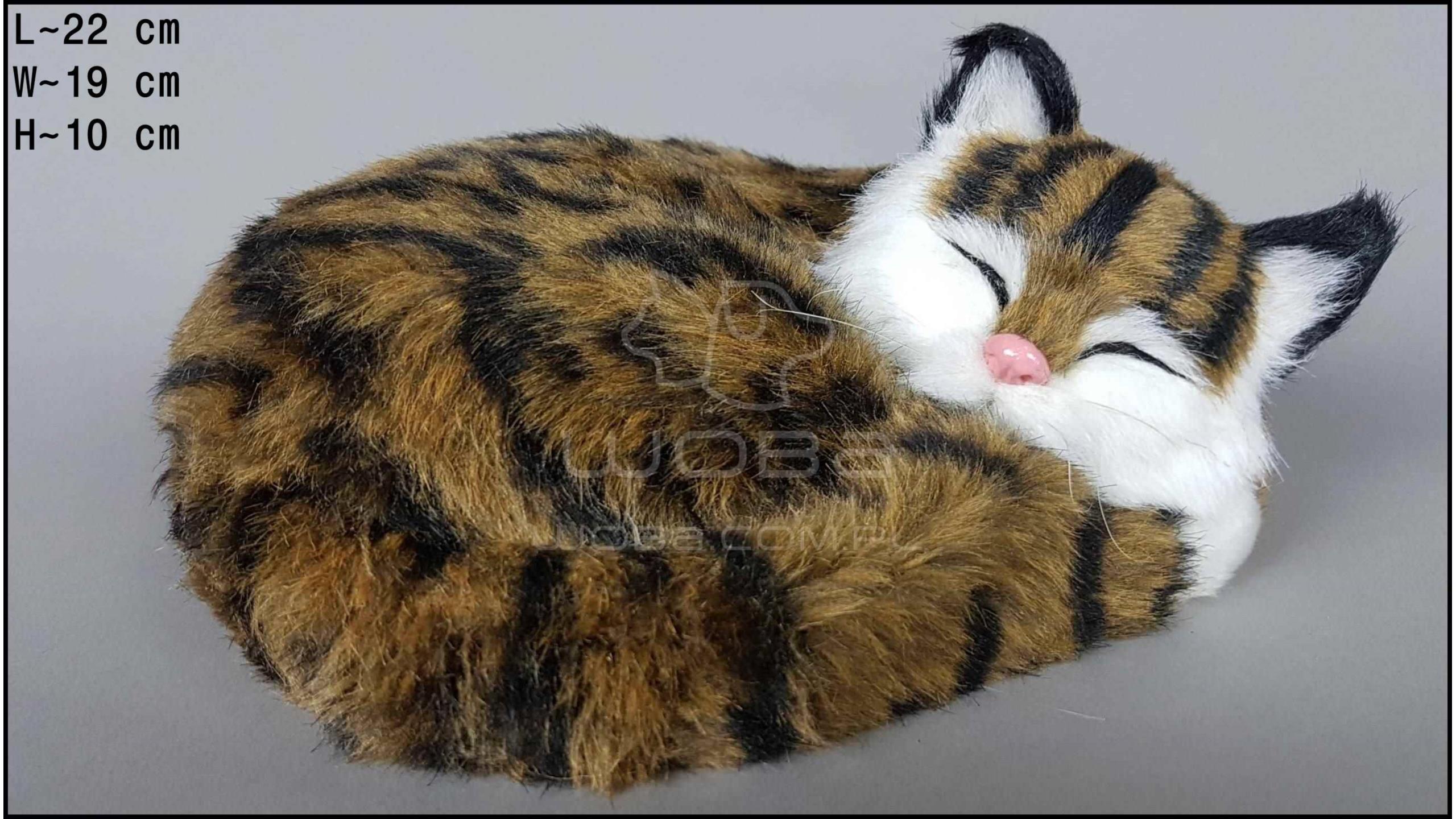 Kot oddychający Brązowy