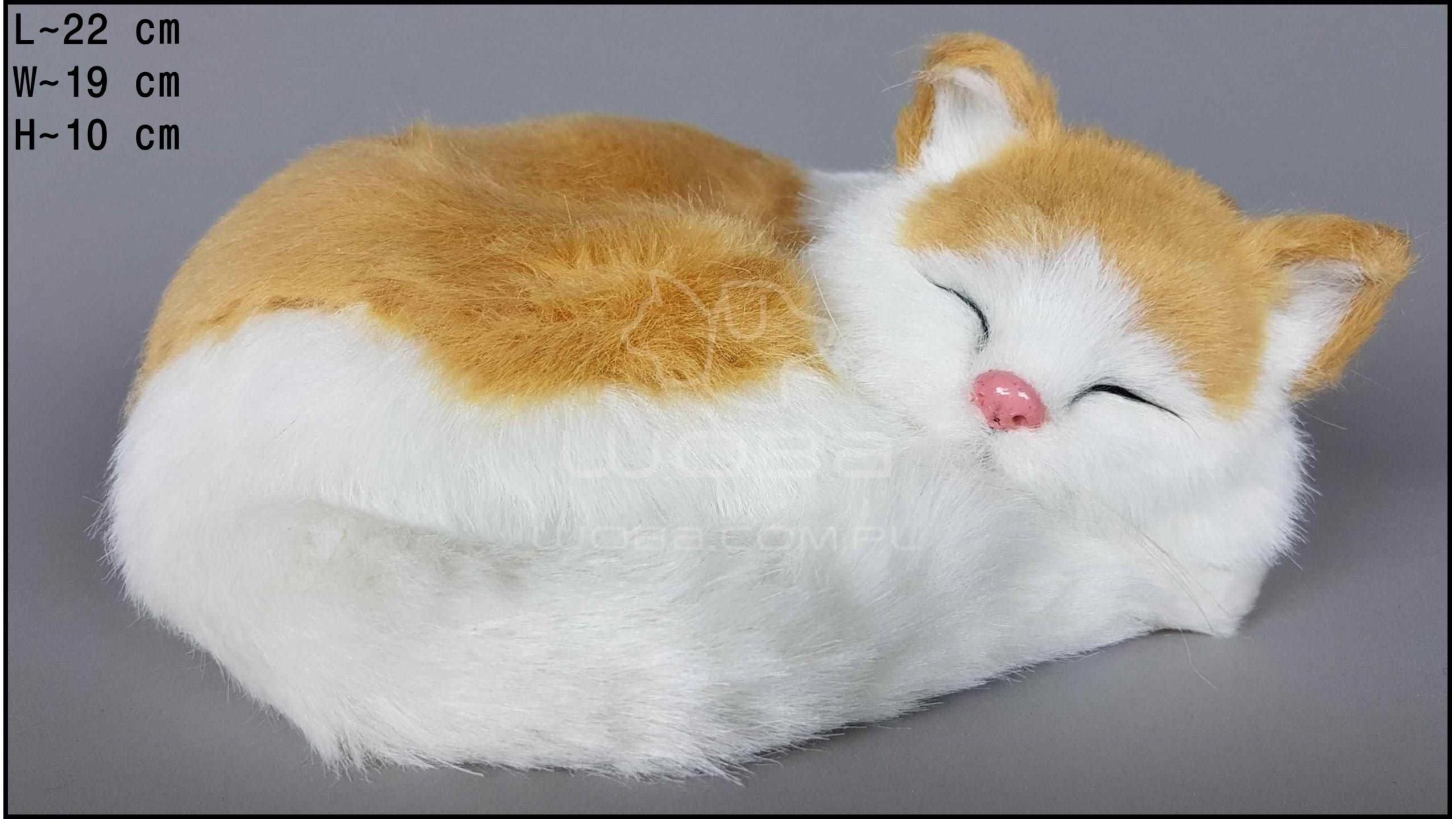 Cat breathing - Biało-Auburn
