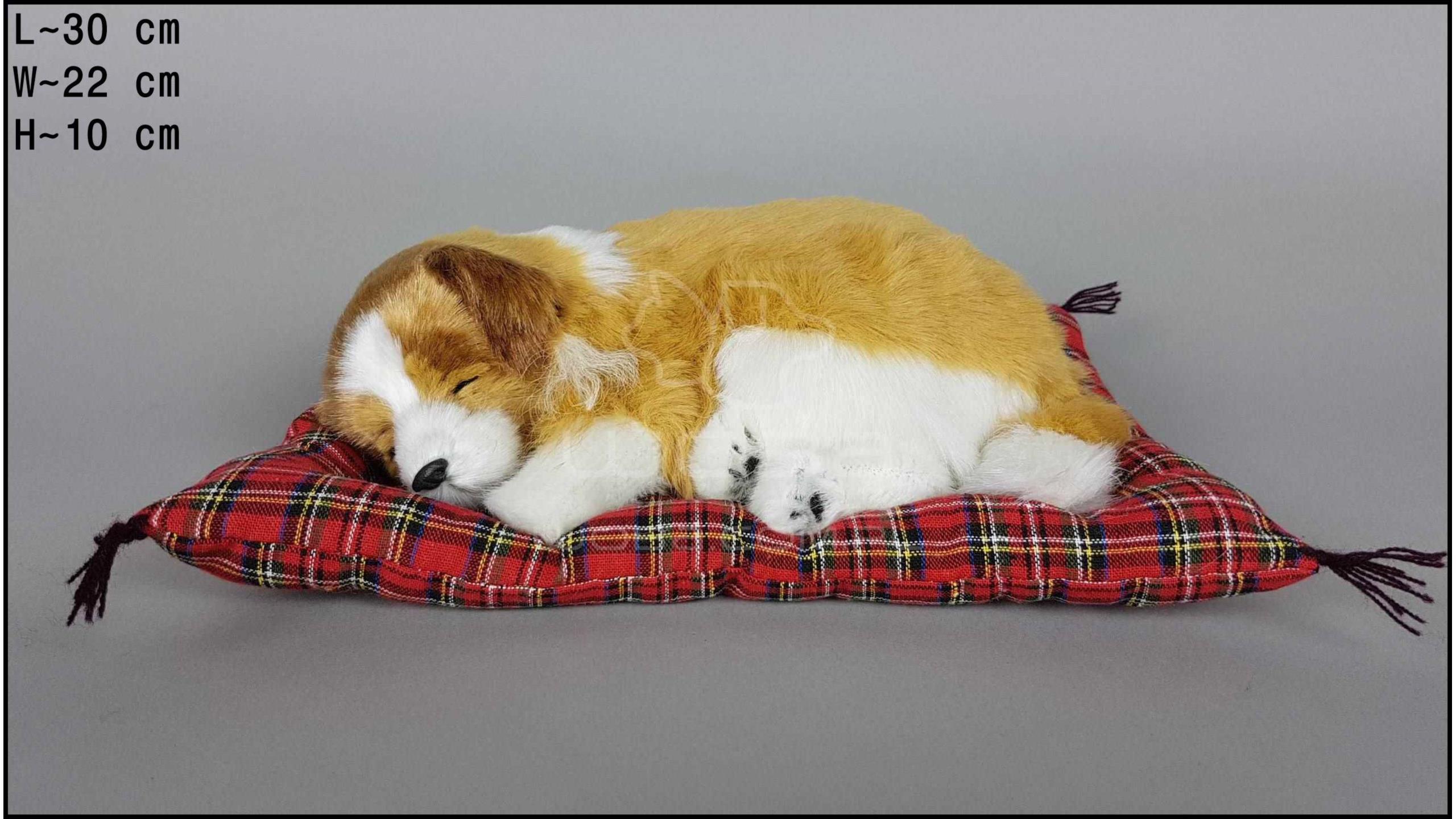 Pies Collie na poduszce Rozmiar L