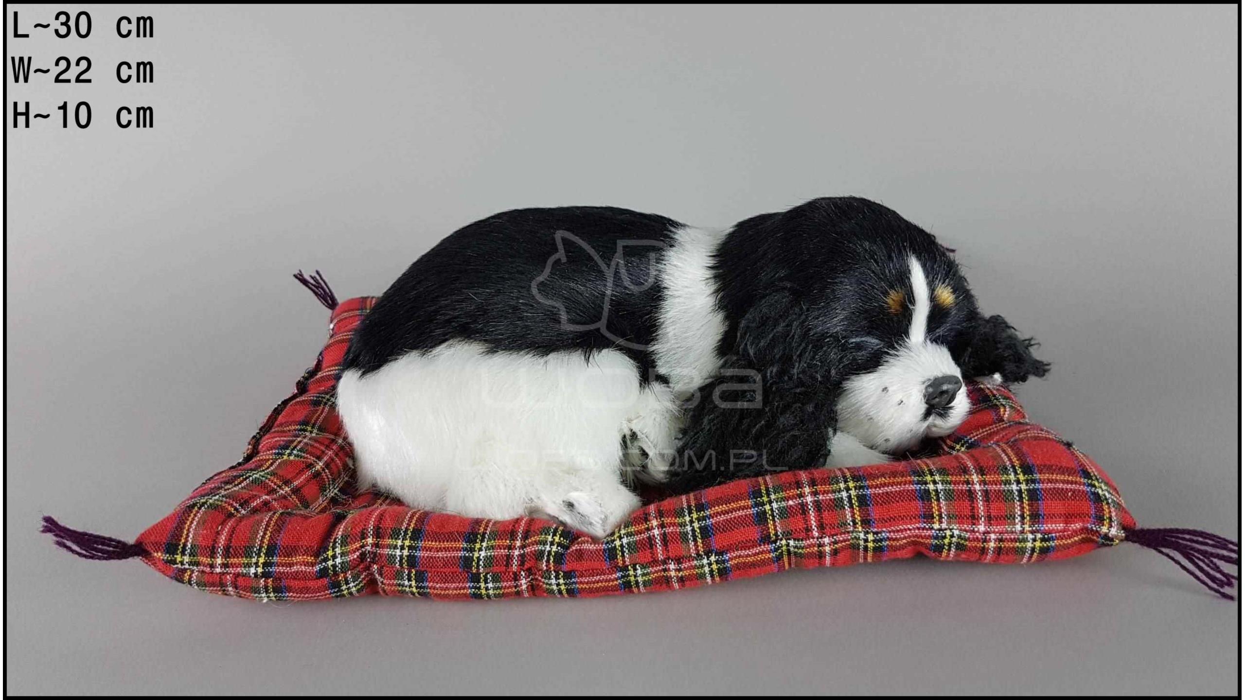 Pies Cocker Spaniel na poduszce Rozmiar L - Czarno-Biały