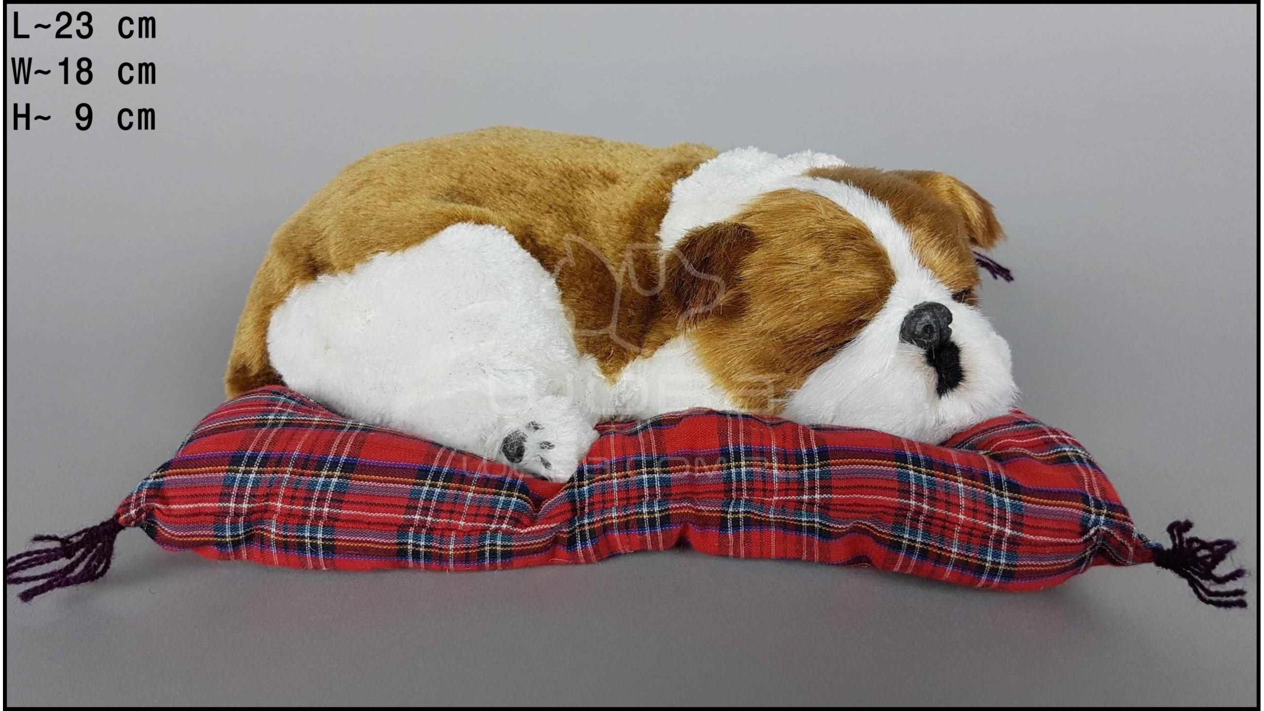 Pies Bulldog angielski na poduszce Rozmiar M