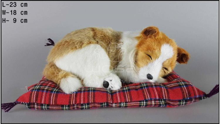 Pies Collie na poduszce Rozmiar M