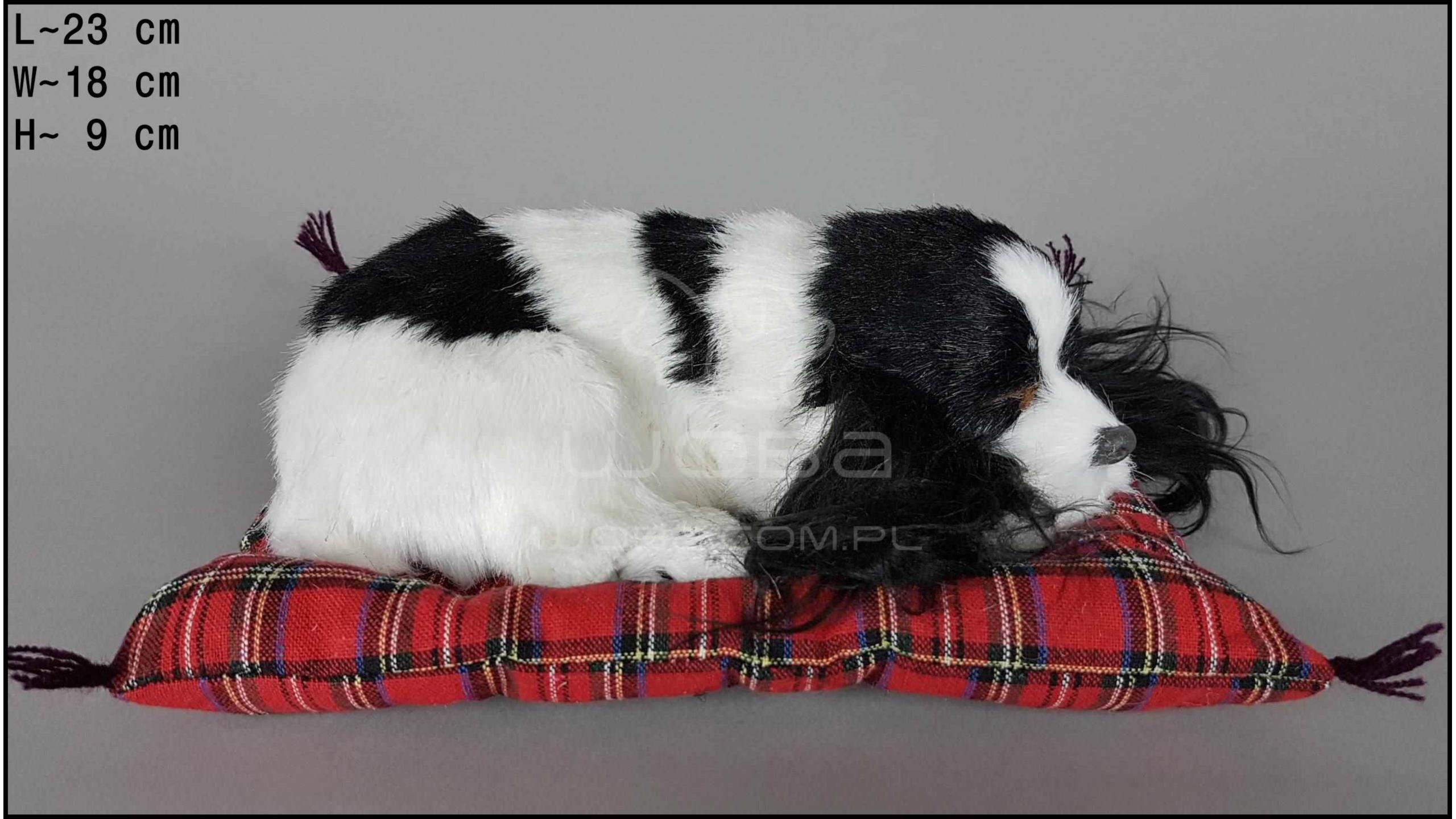 Pies Cocker Spaniel na poduszce Rozmiar M - Czarno-Biały