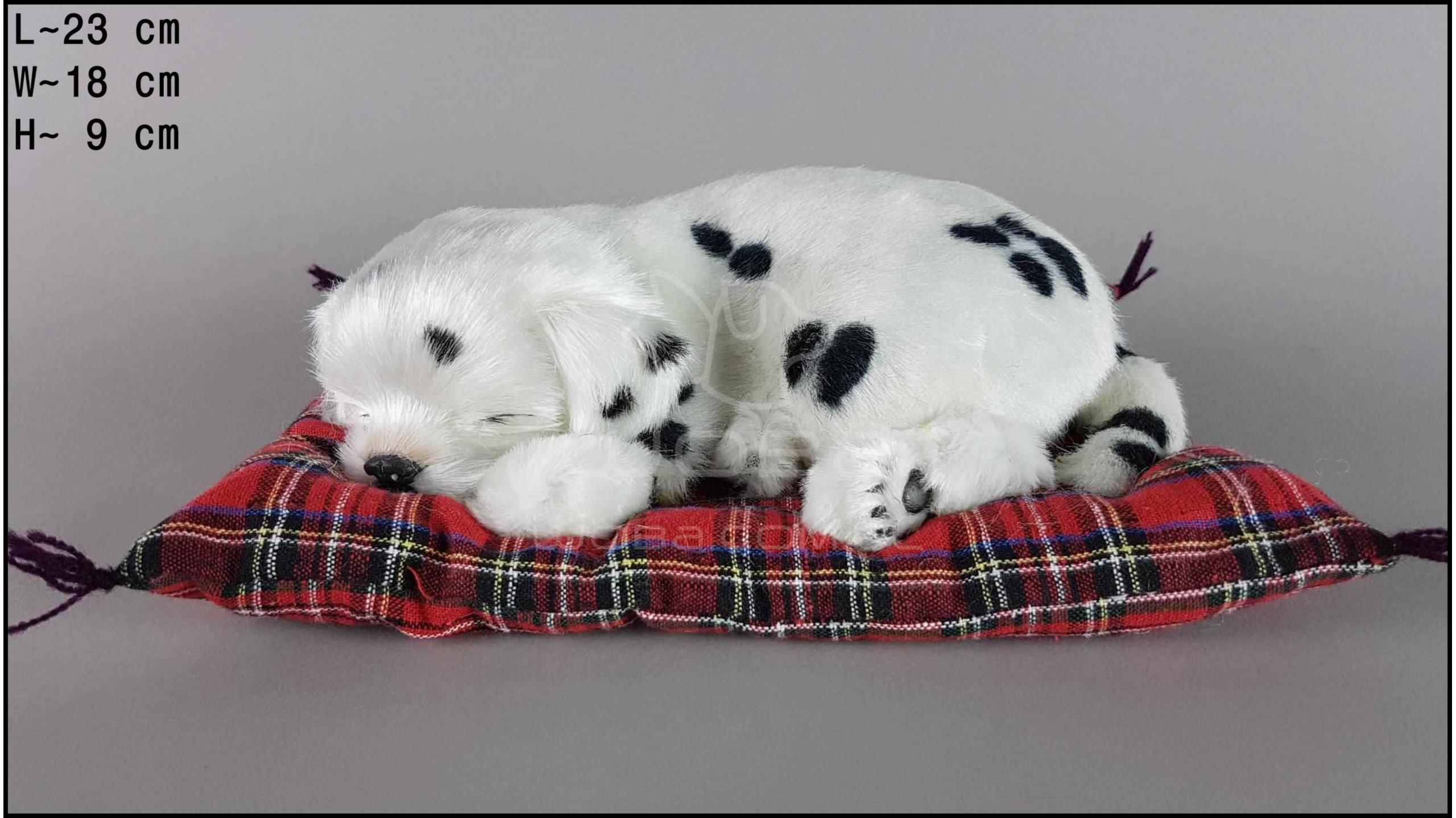 Pies Dalmatyńczyk na poduszce Rozmiar M