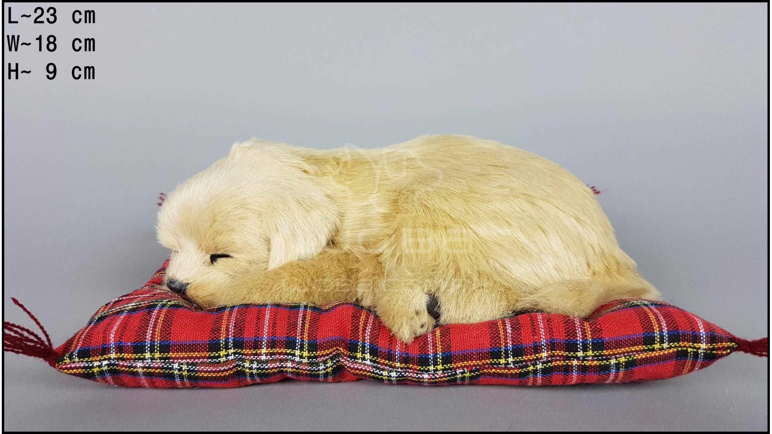 Pies Labrador na poduszce Rozmiar M - Biszkoptowy