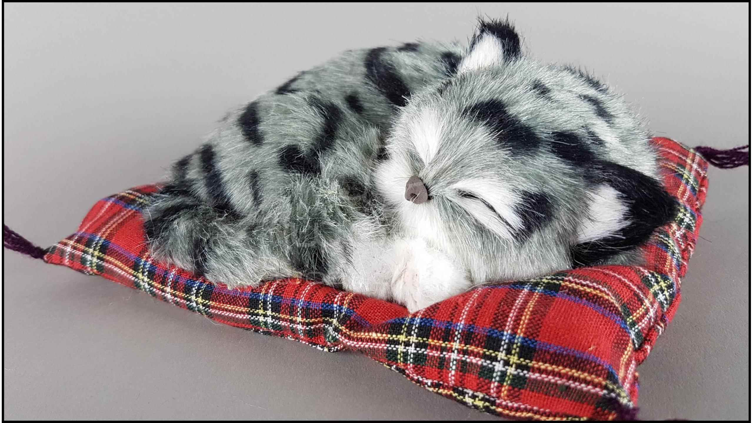 Veľké veľkosti mačička pics