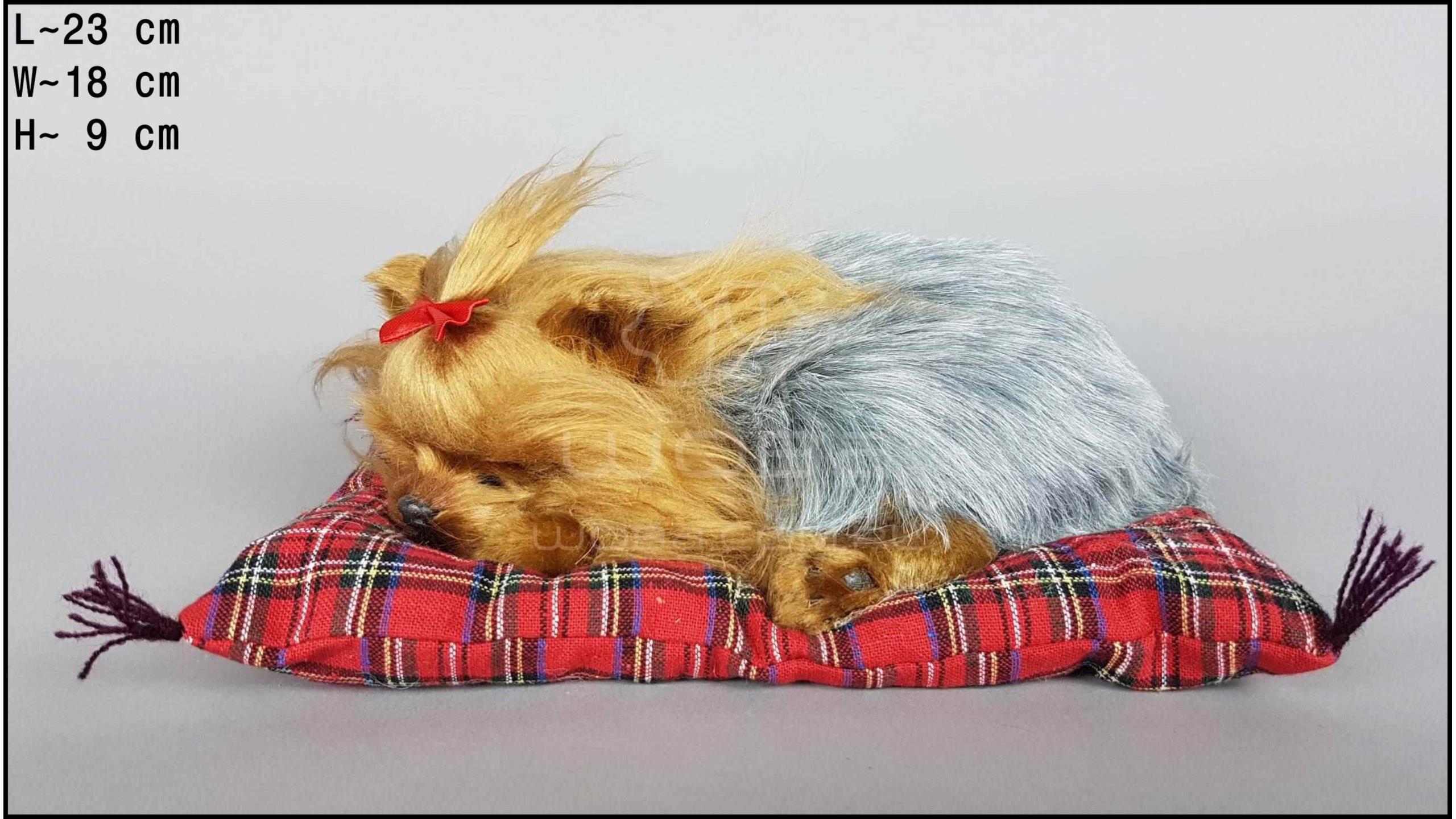Pies Yorkshire Terrier na poduszce Rozmiar M