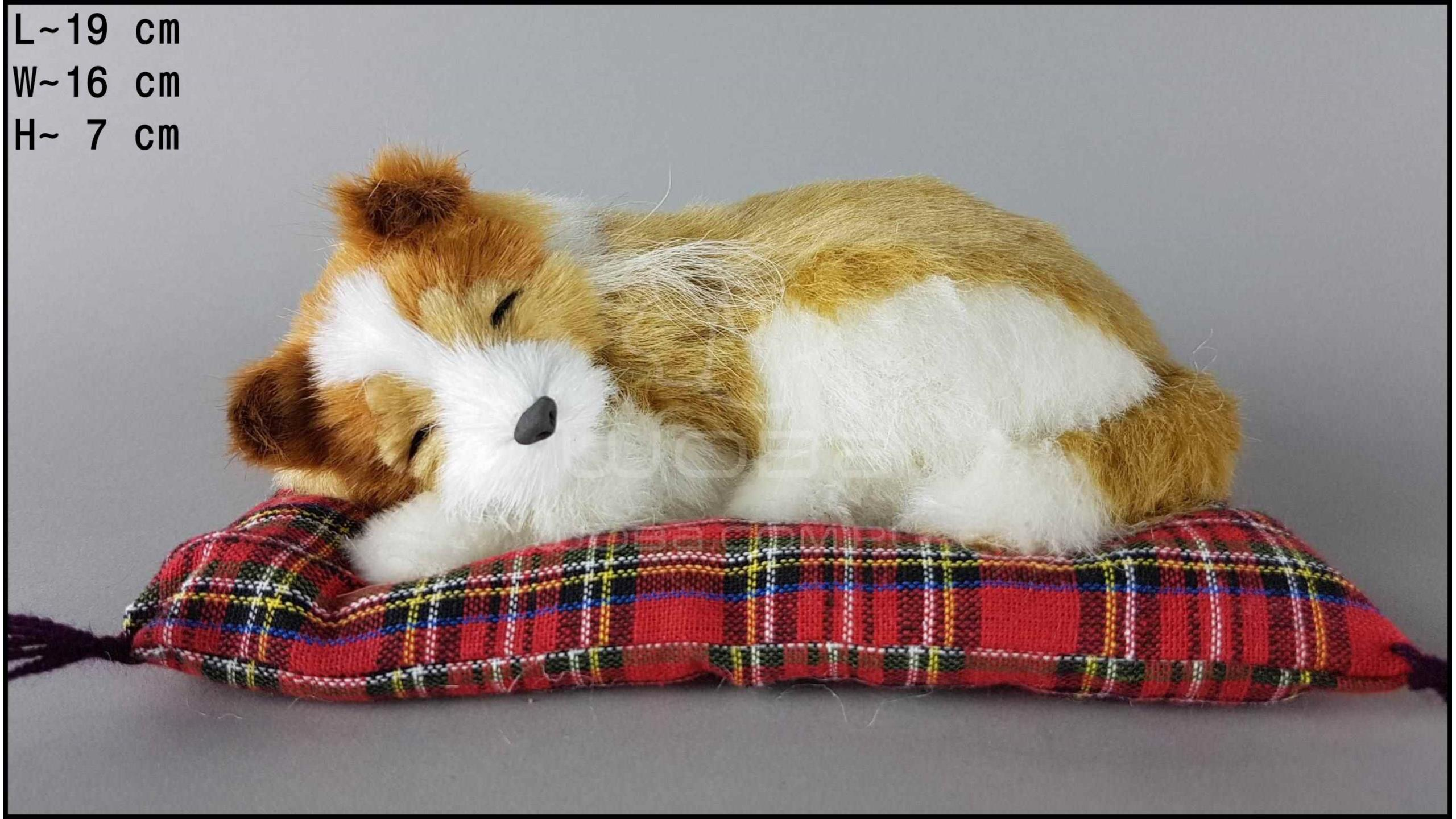 Collie on a pillow - Size S