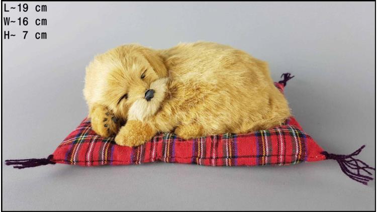 Labrador na poduszce Rozmiar S - Biszkoptowy