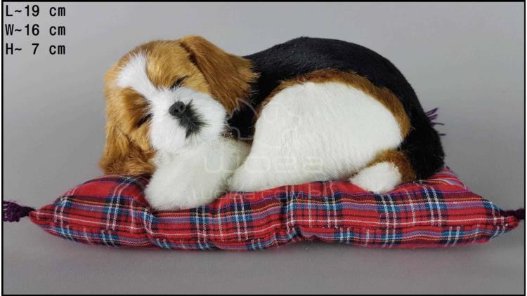 Pies Beagle na poduszce Rozmiar S