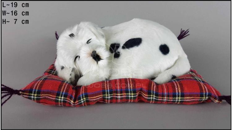 Pies Dalmatyńczyk na poduszce Rozmiar S